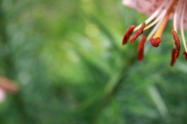 5.Close.Up.Flower.2.png