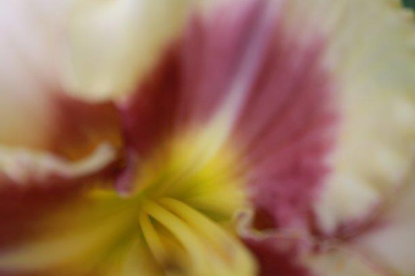 6.Close.Up.Flower.3.png