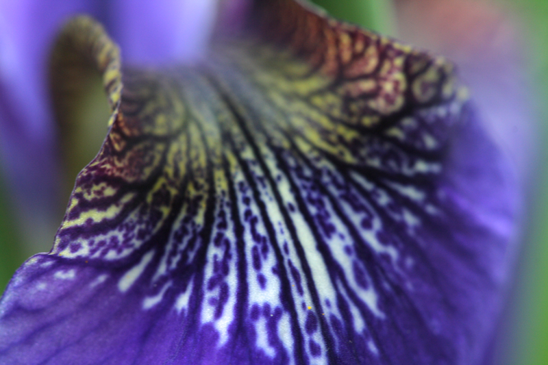 7.Close.Up.Flower.4.png