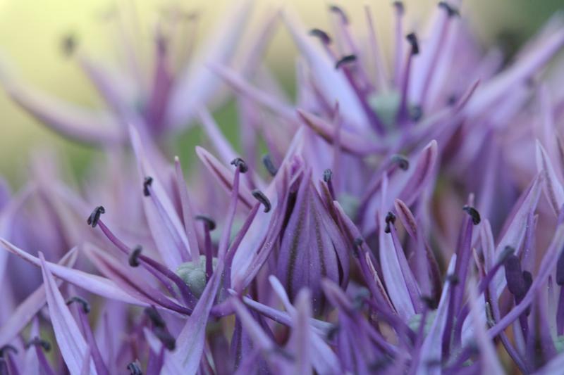 Spiky Flower - By Jennifer Botto