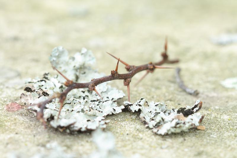 Thorn- By Jennifer Botto