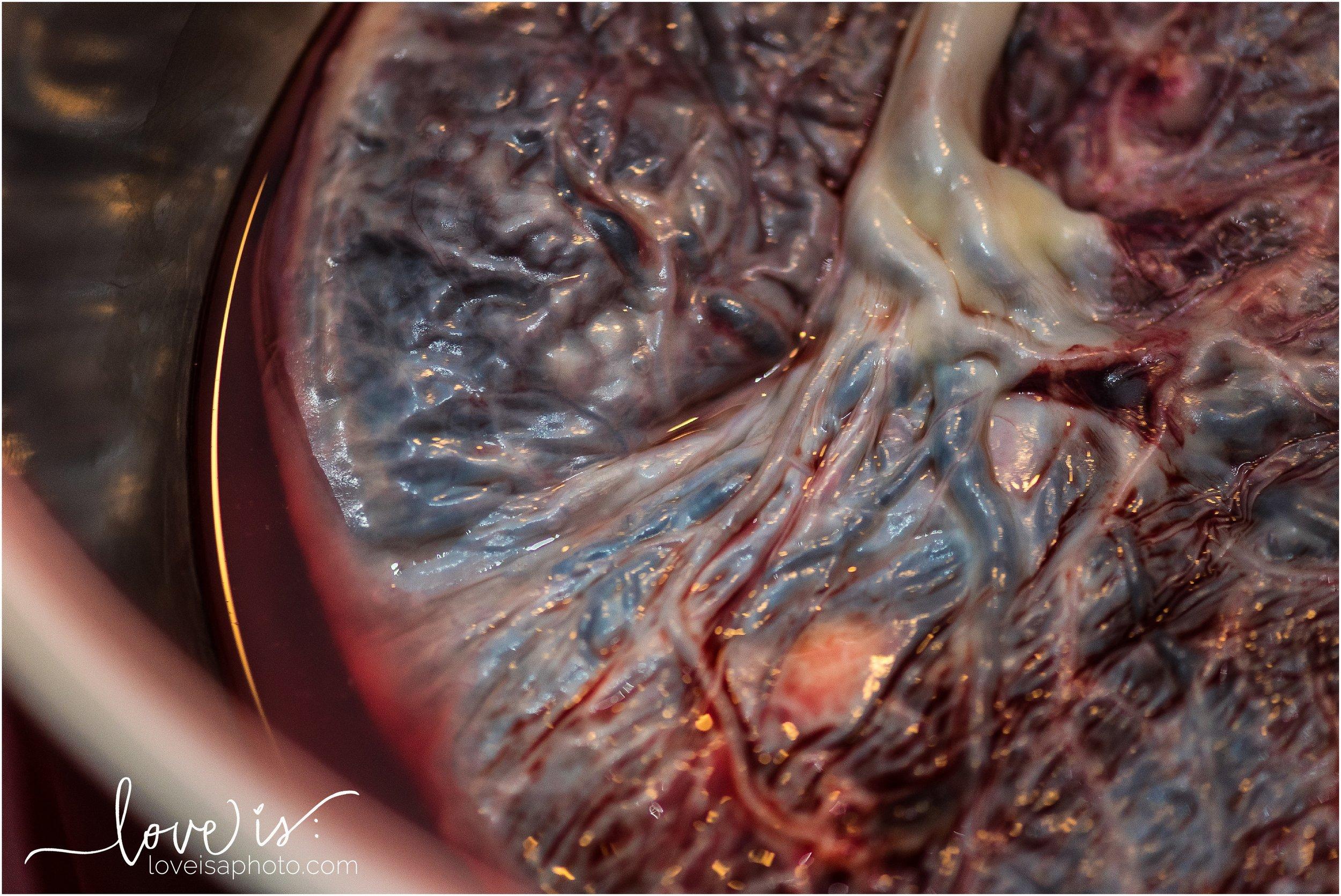Colorado Birth Photographer, Colorado Birth Photography_5148.jpg