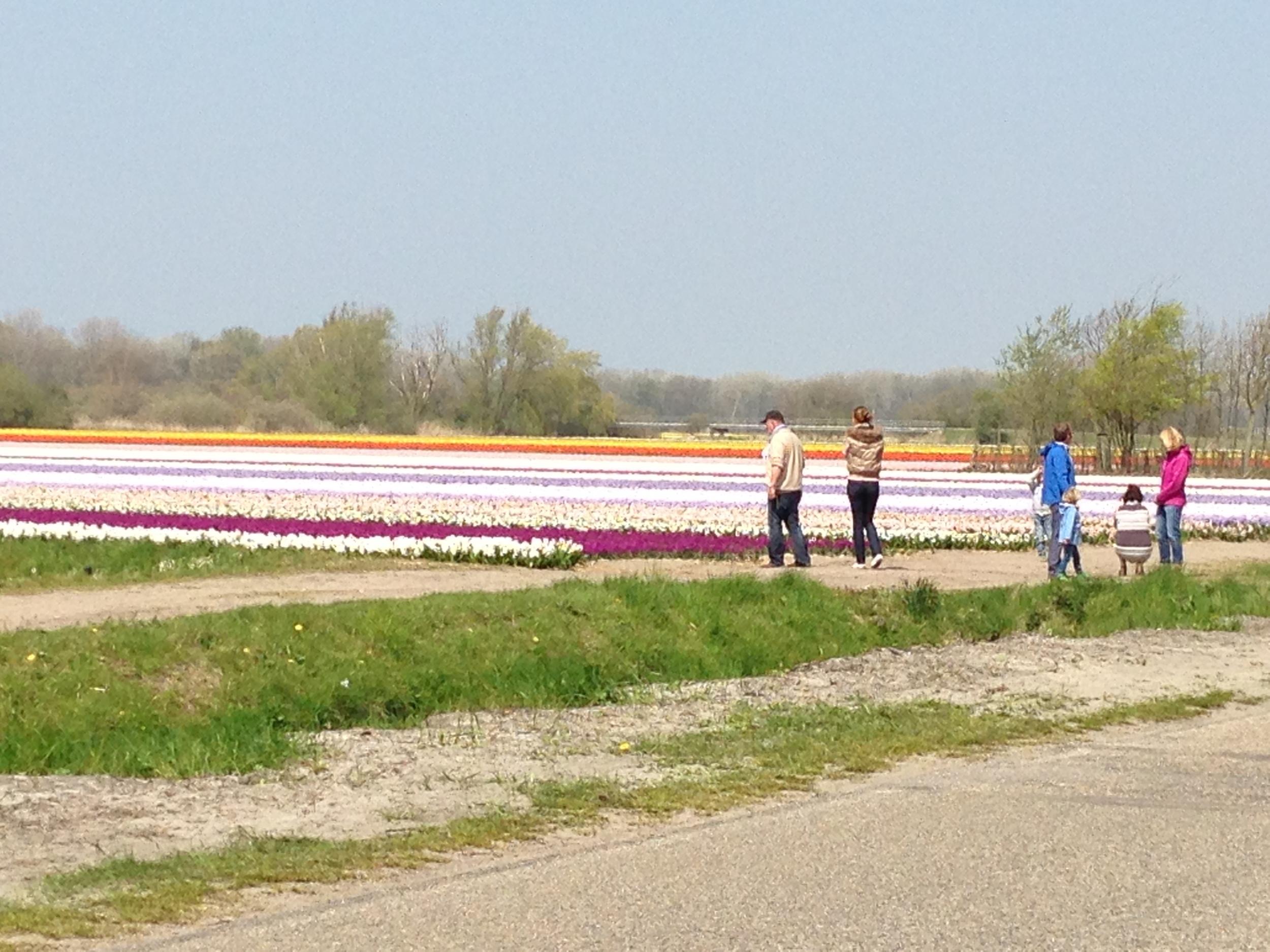 Blomsteridéer i Holland, Blomsterideer, Annie Dorthe Sandholm