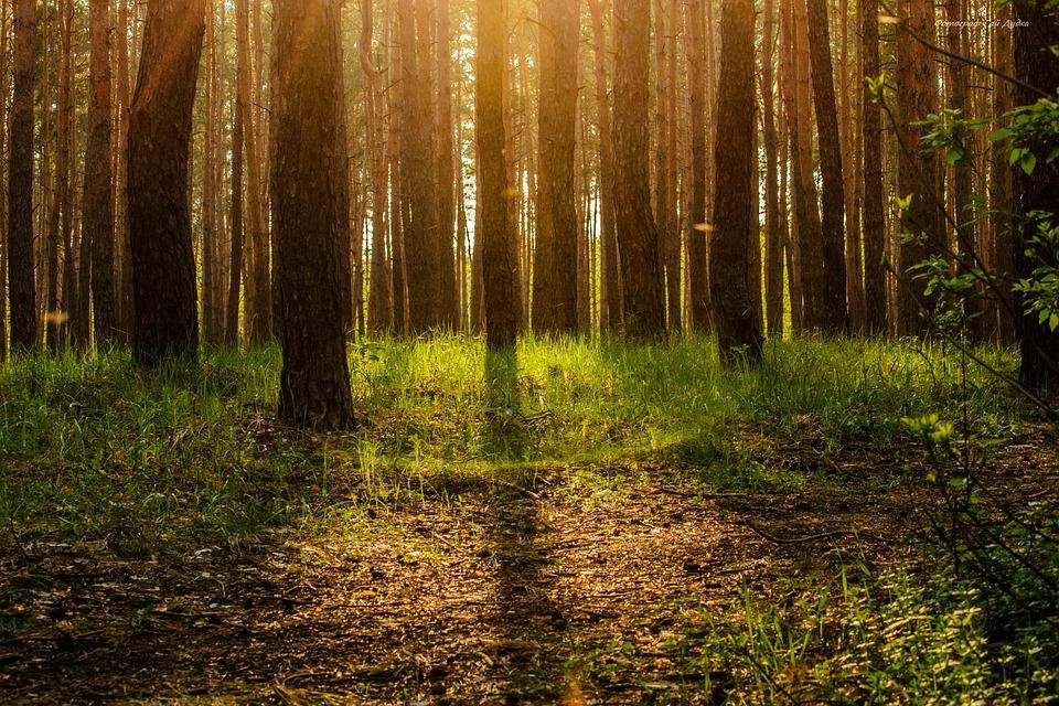 Foto: lånt fra https://pixabay.com/en/forest-ecology-tree-magic-story-2255569/