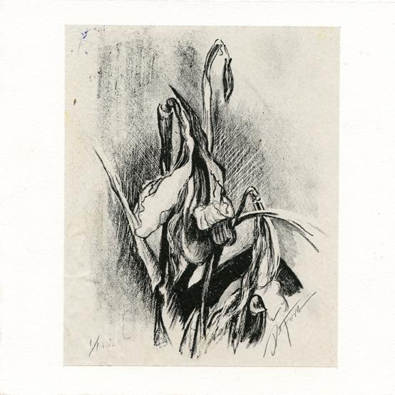 Begrich, Emily: Lirio xxvii lithographychinecolle