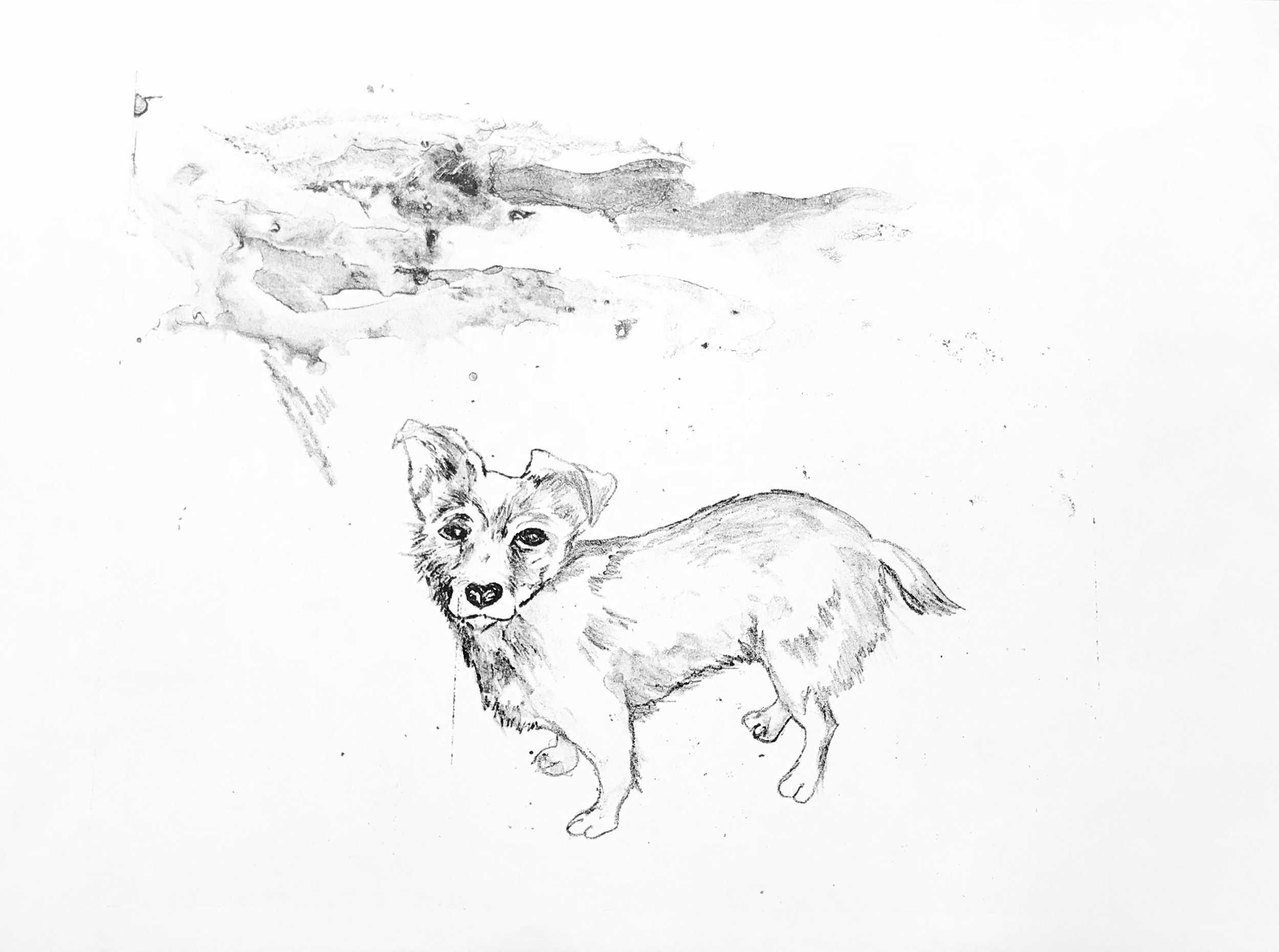Waterless lithography work in progress by Penny Brewhill