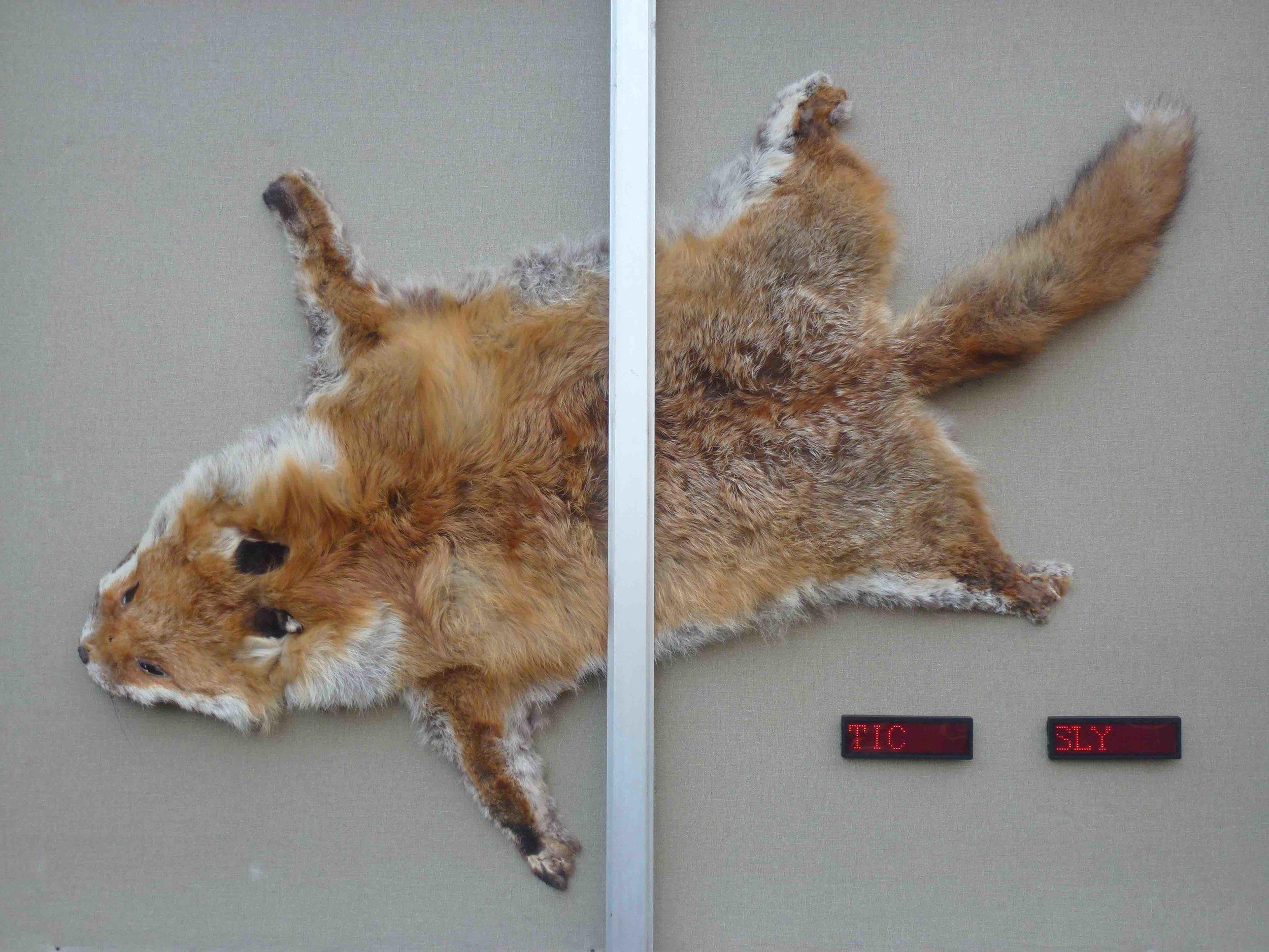 Foxing FP 1.jpg