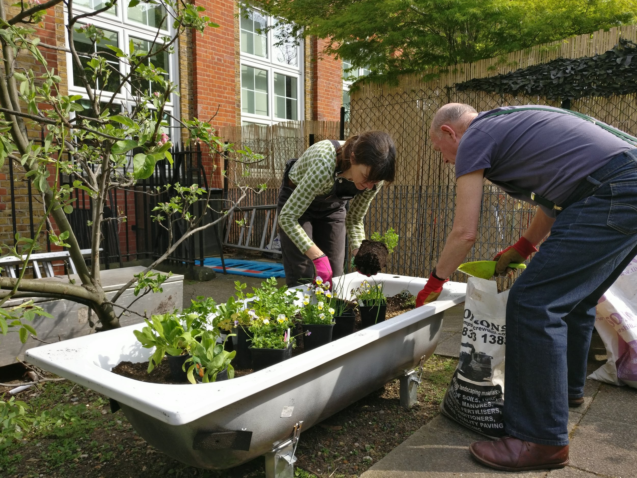 Planting at New City College as part of the Adopt a Tub project
