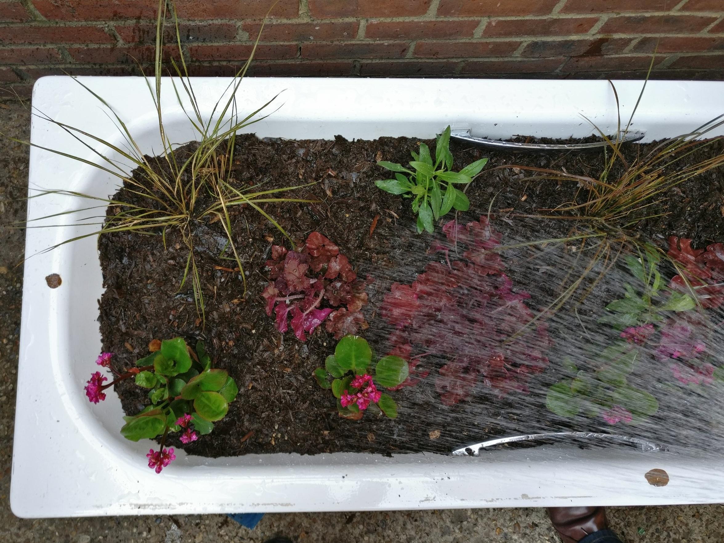 Planting Tubs on Myrtle Walk