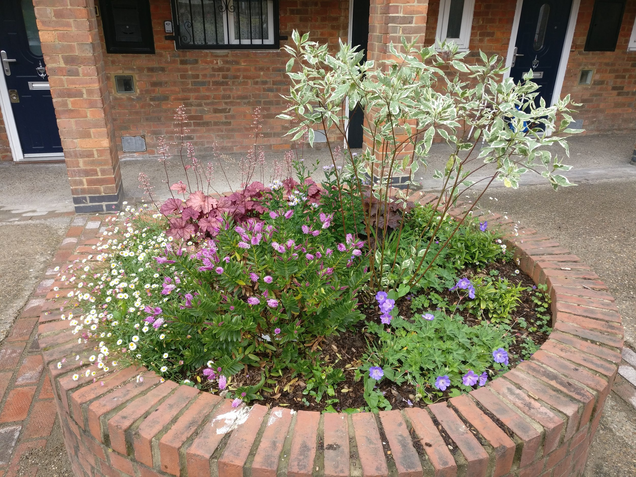 Blooming beds in June 2019