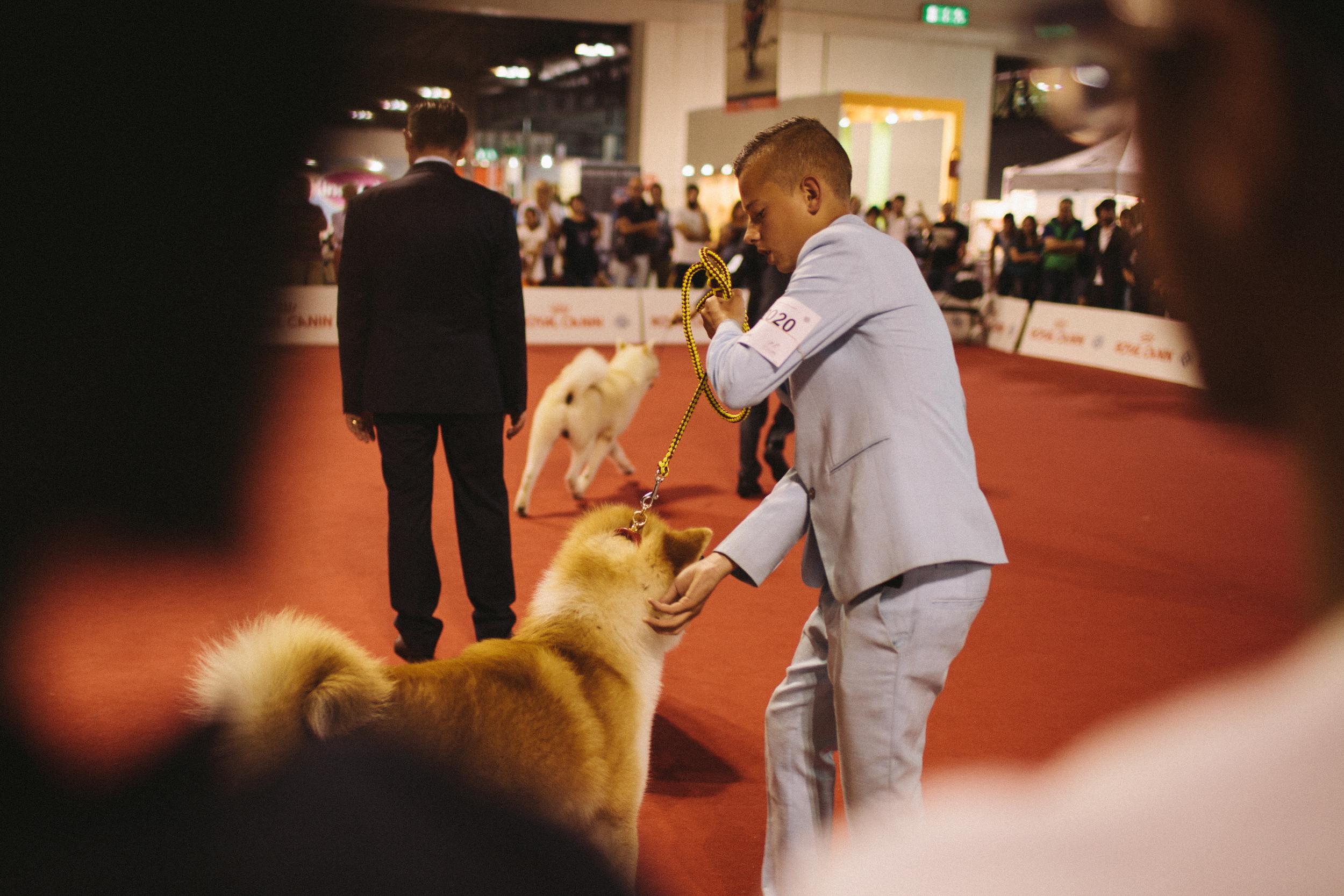 worlddogshow (8 di 50).jpg