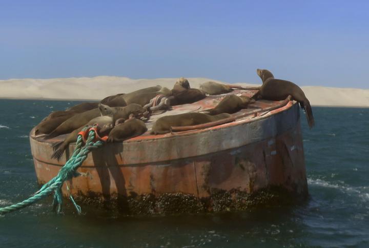 Merileijonat päivystämässä satamaa!