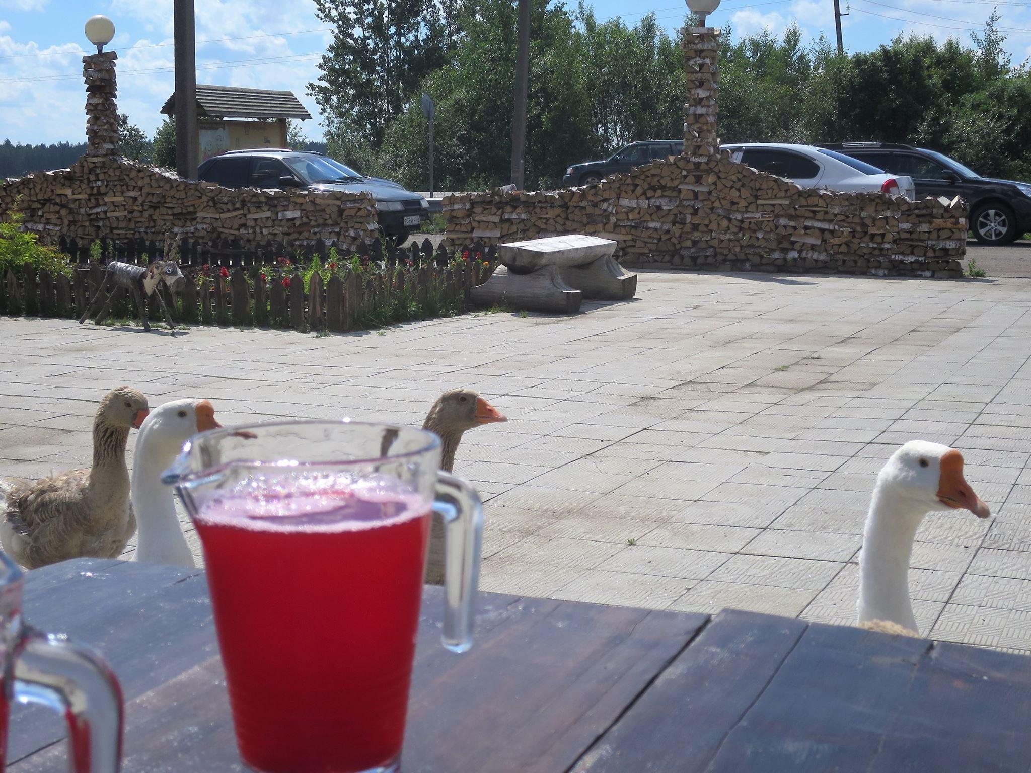 Hanhet, ankat, vuohet ja kanat liikkuvat ravintolan pihalla vapaana... Odottavat varmaankin vuoroaan :)