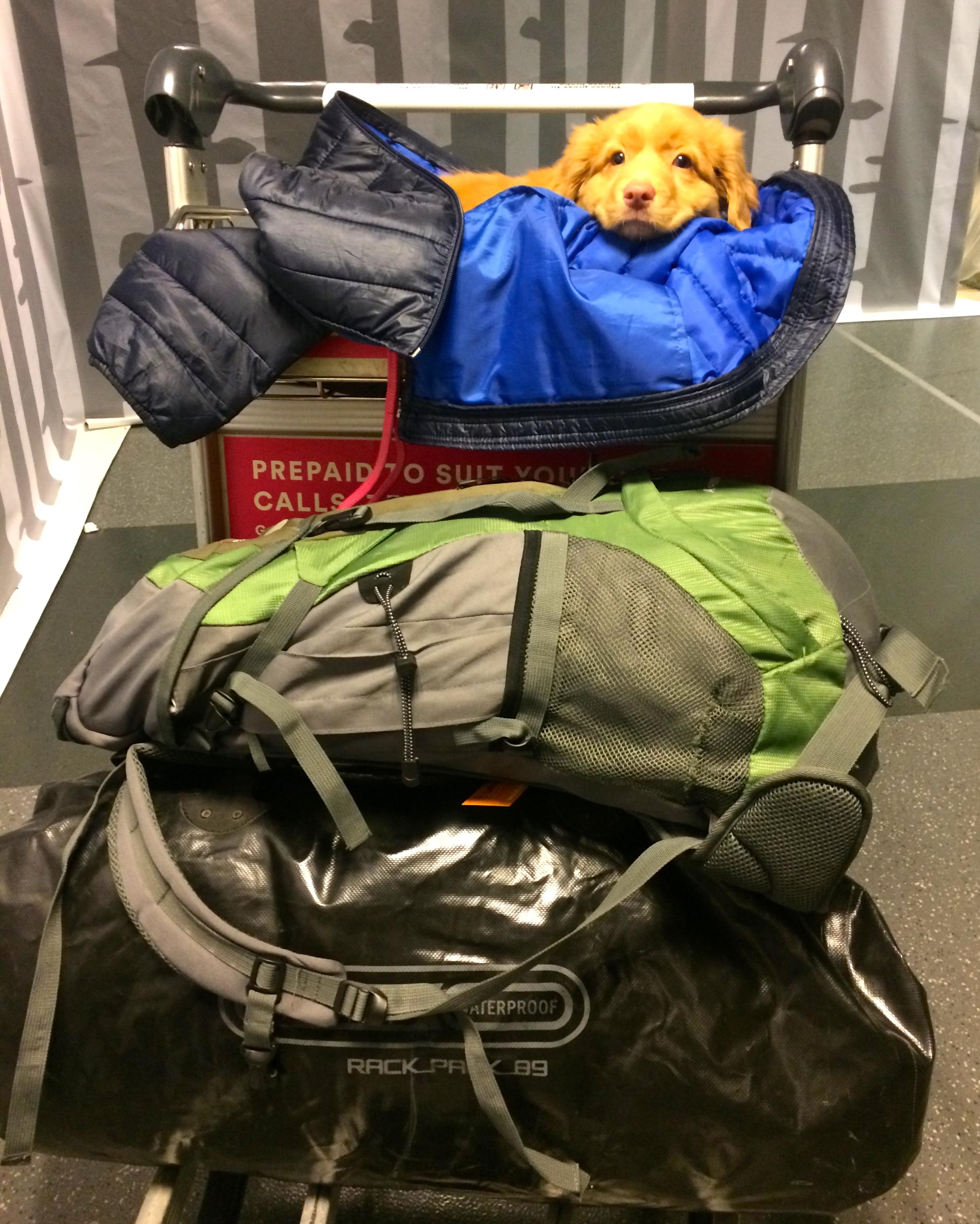 Pekan matkatavarat kulkivat HelsinkiVantaalla vahtikoiran valvonnassa :)