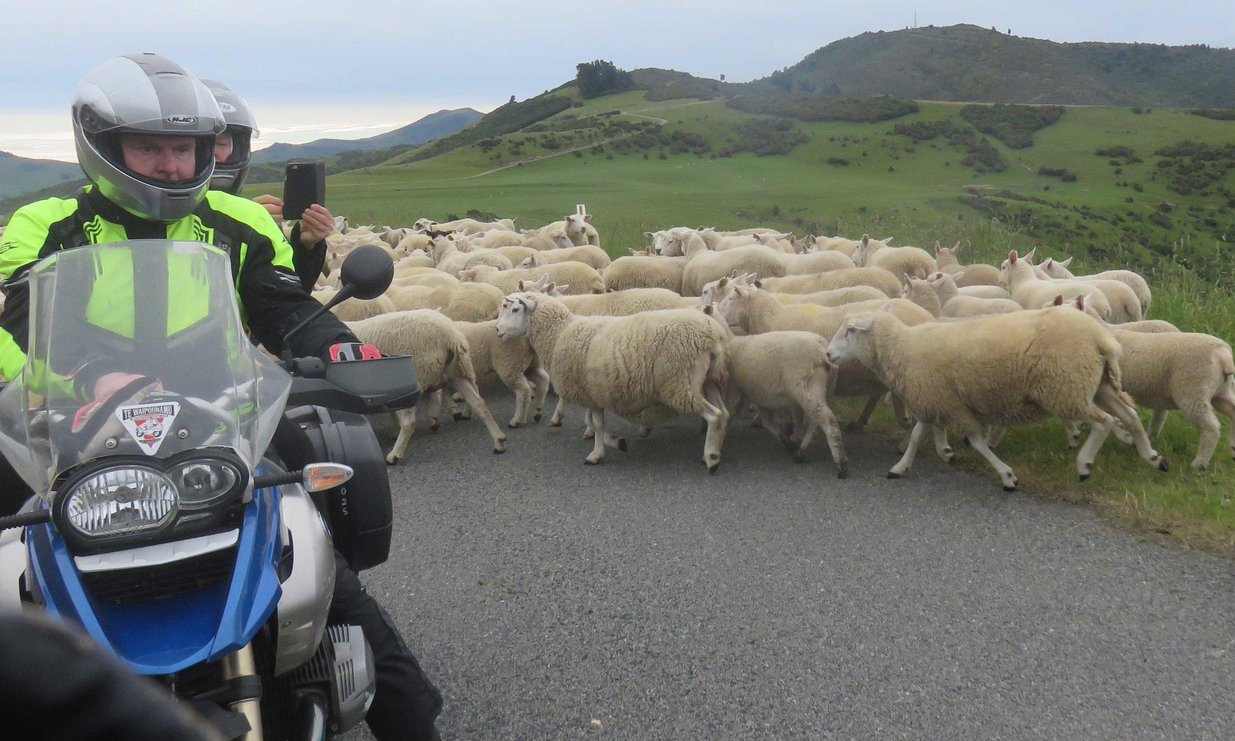 Nurmirannat ja lampaita tourist drivellä!