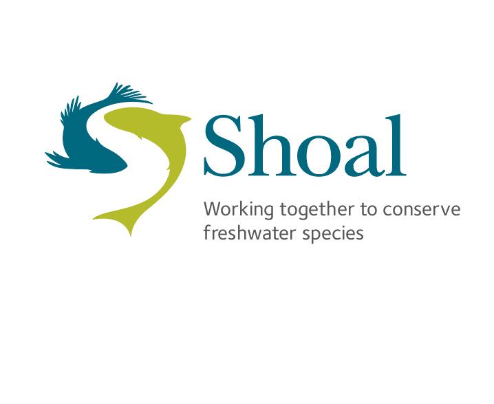shoal.jpg