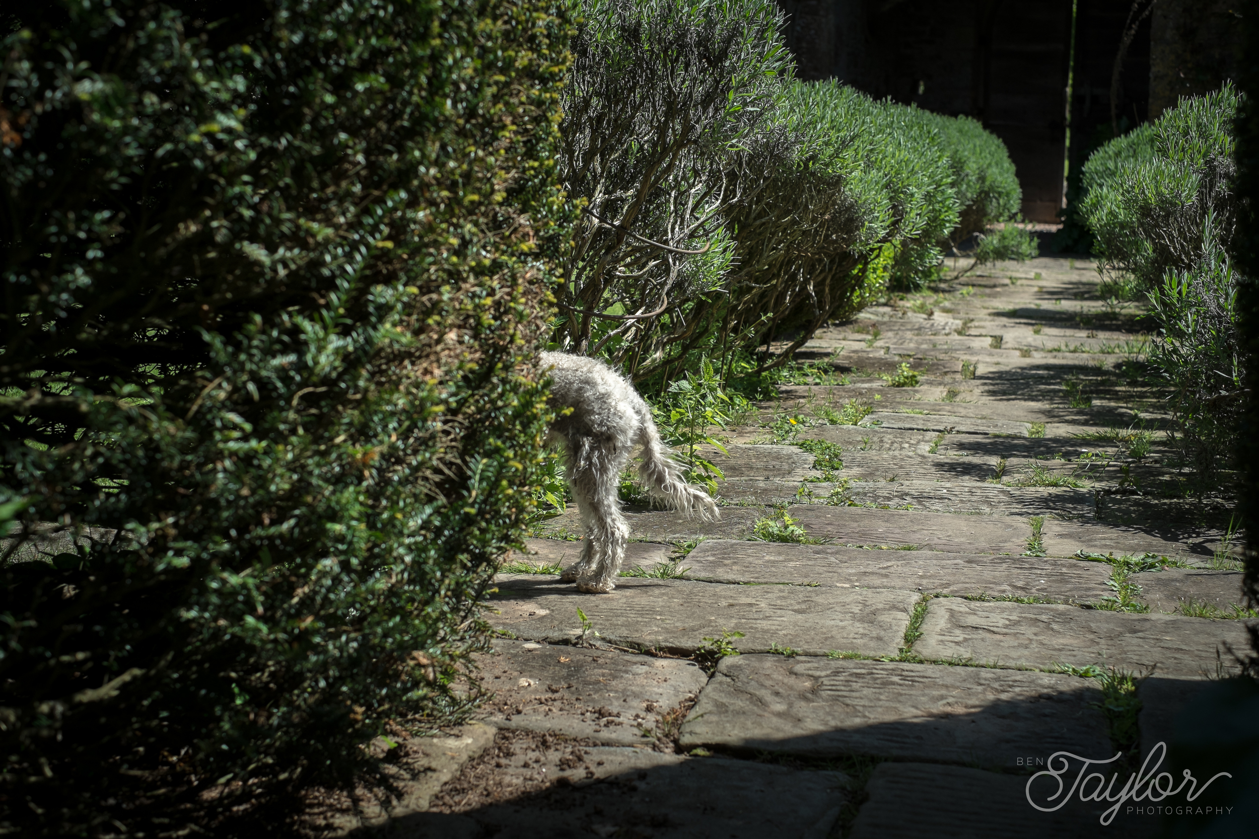Cothay Manor Shoot-57.jpg