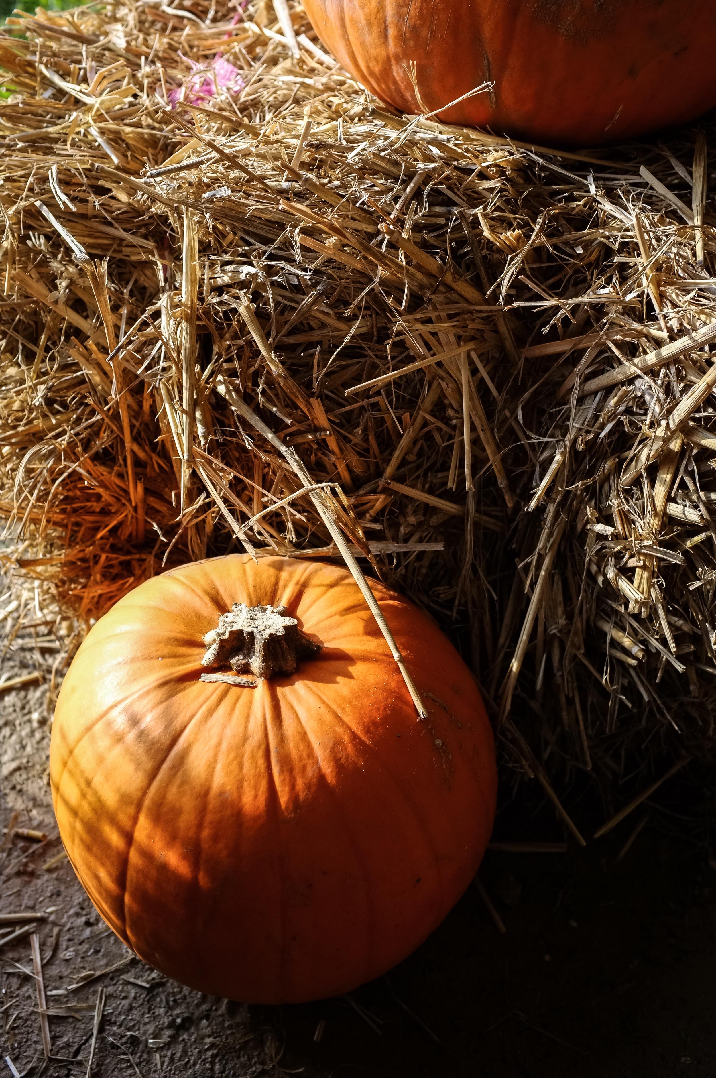 H&W Pumpkin Fest 2015-56.jpg