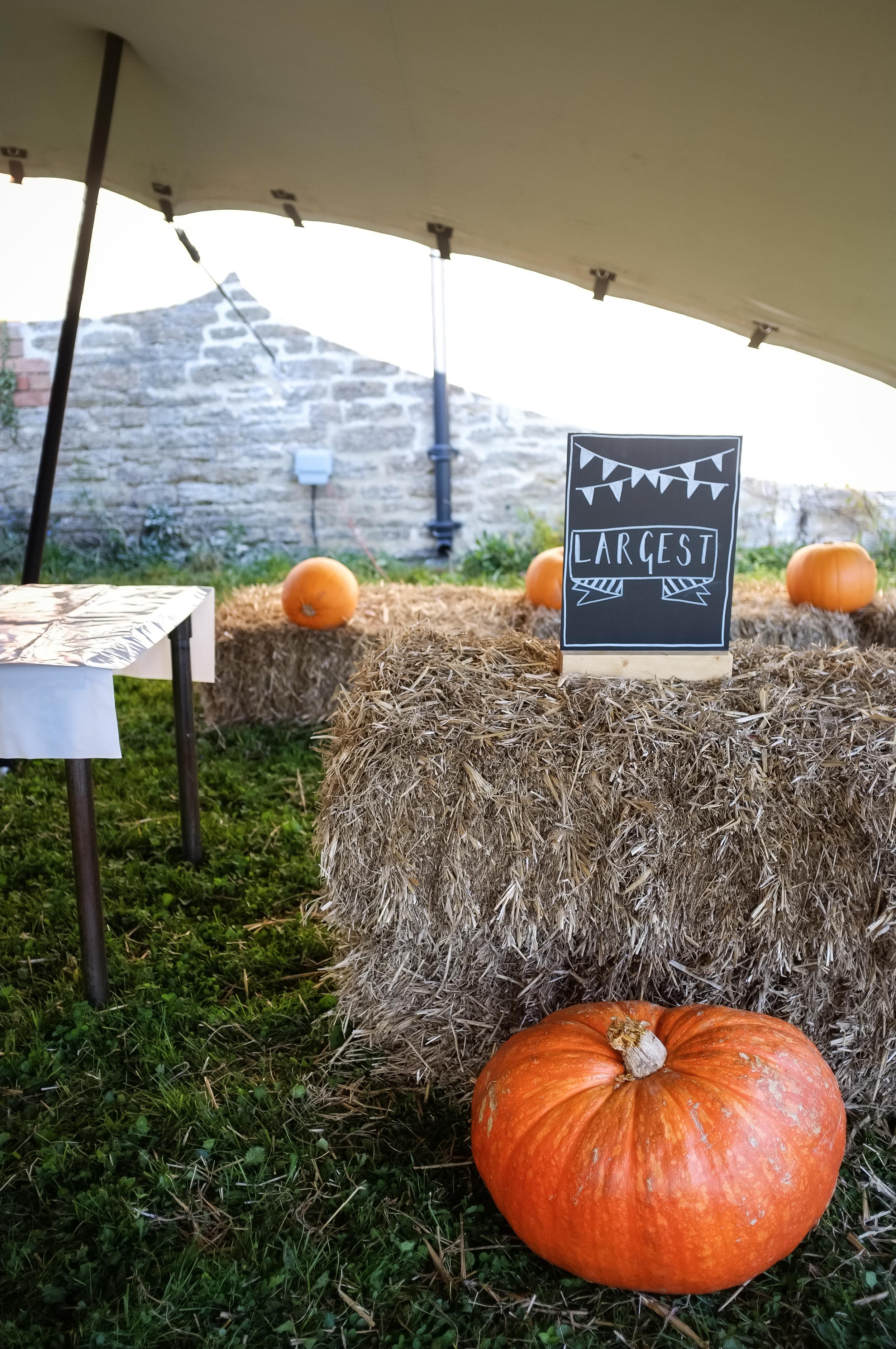 H&W Pumpkin Fest 2015-133.jpg