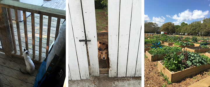from left to right: Monty being curious about outside, Tico and his bestie having a mischievous backyard play-date, and the community garden that's around the corner :)
