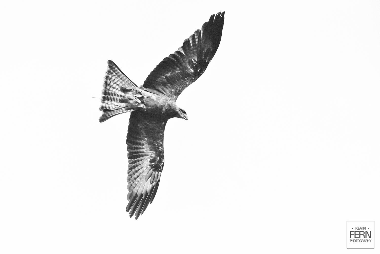 hrh-princess-anne-bird-of-prey-event-3.jpg