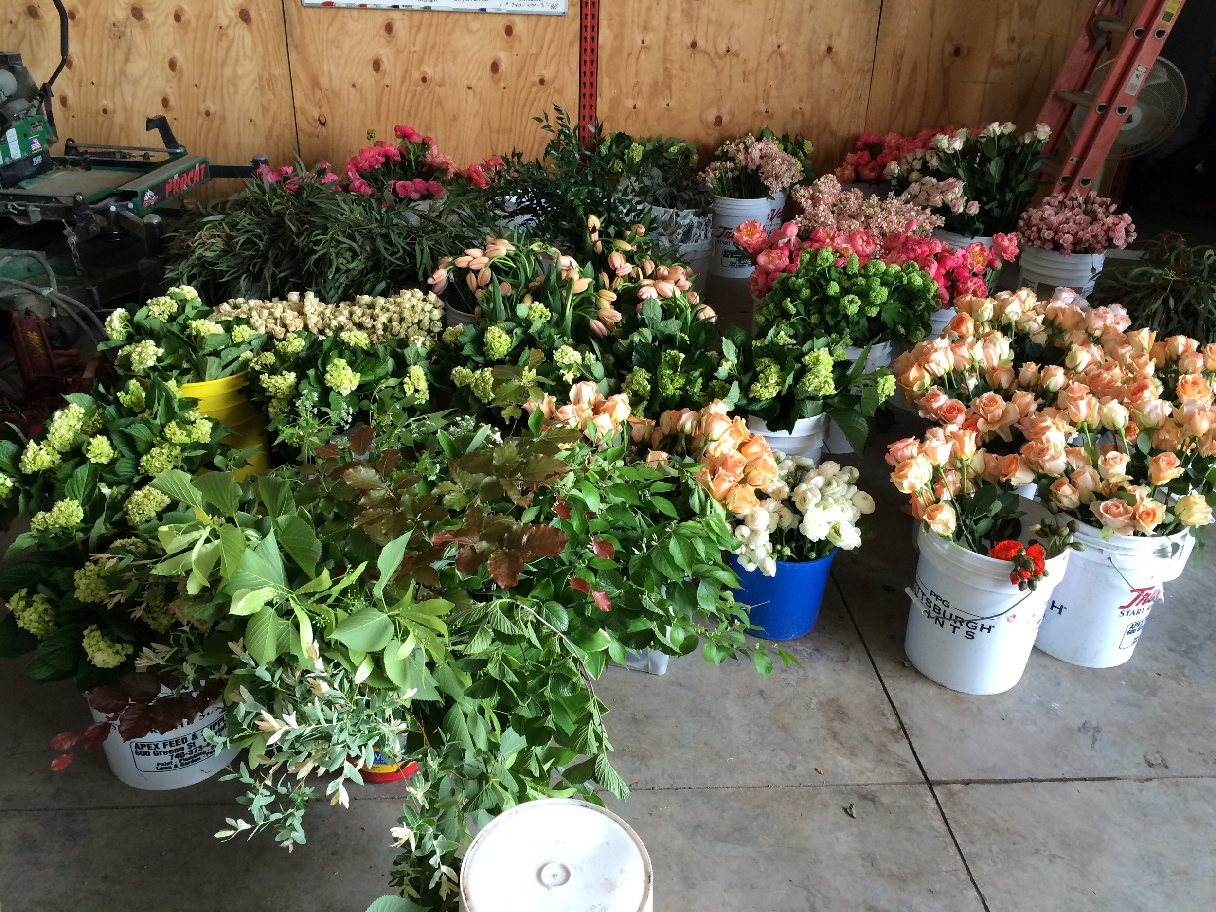 A peek at all the flower bounty after unpacking all the flowers---including 300 'Coral Charm' Peonies that Caroline ordered in for the wedding