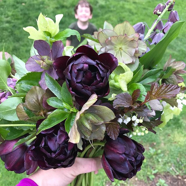 Gathered these beauties from the garden to create a special bouquet in memory of Ray. Includes hellebores , 'Black hero' tulips, Fritillaria persica, physocarpus, plus a few stems of lilac and lilies of the valley added a heavenly fragrance. #granvilleohio #flowersofinstagram #ayearinflowers #week18flowers #growfloret #ohioflowers #helleboreappreciationsociety