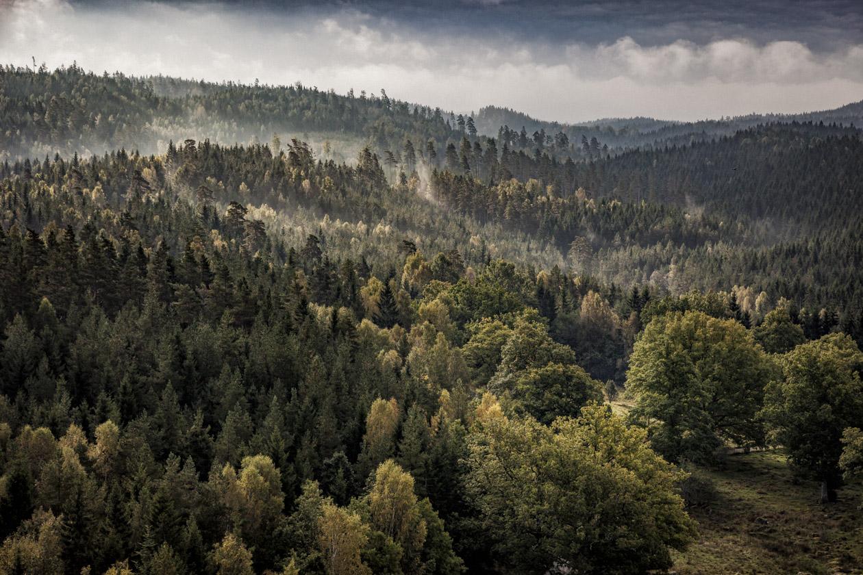 Skog utanför Tollered