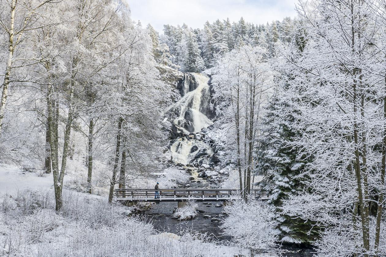 Älgafallet vid norska Bohusgränsen