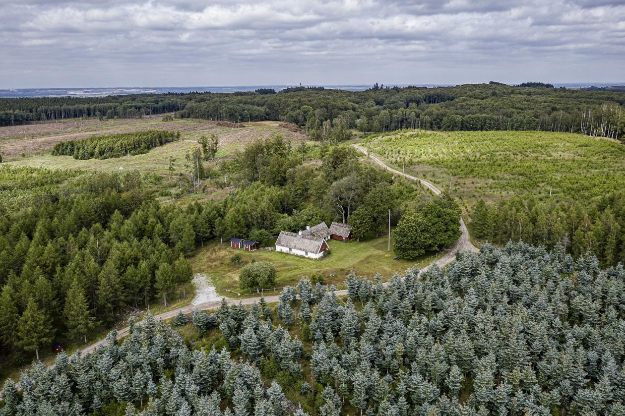 STFs Kullatorpet omgavs tidigare bara av bokskogar