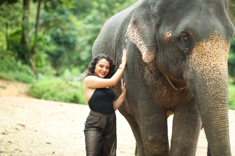 elephant-1.jpg