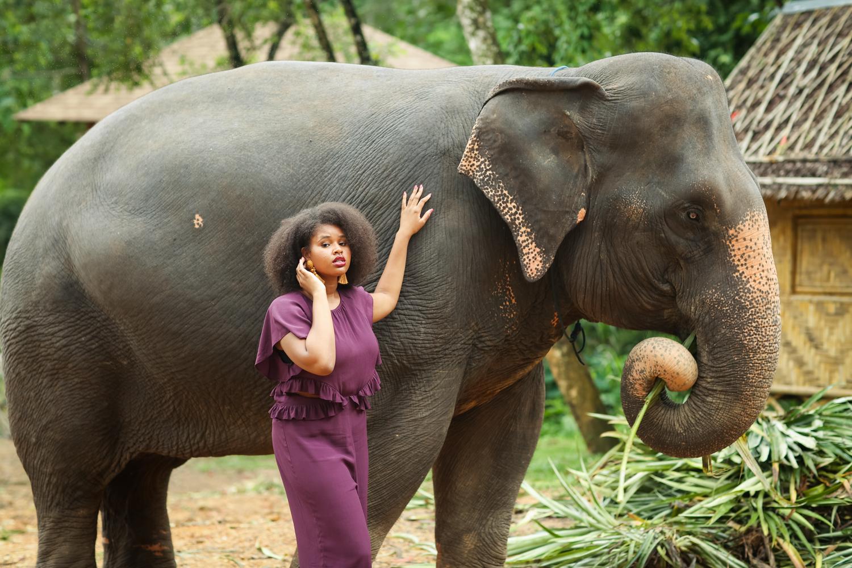 elephant-8.jpg