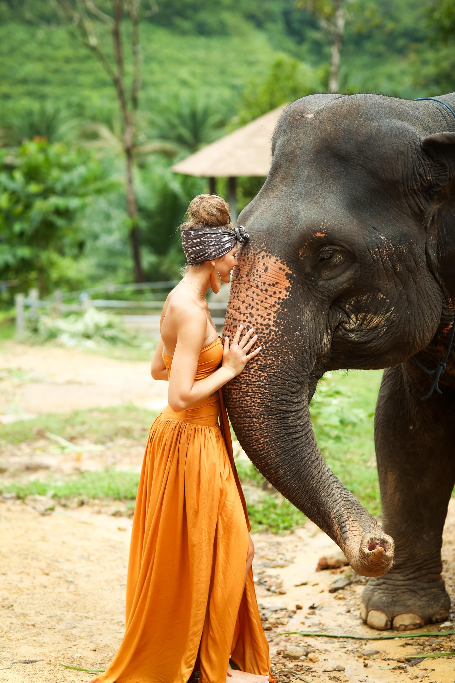 elephant-14.jpg