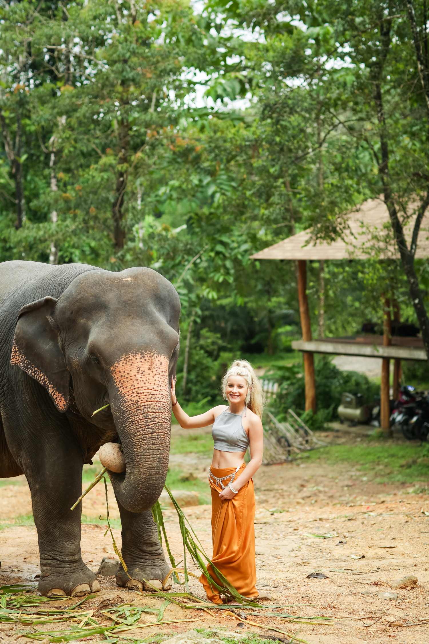 elephant-16.jpg