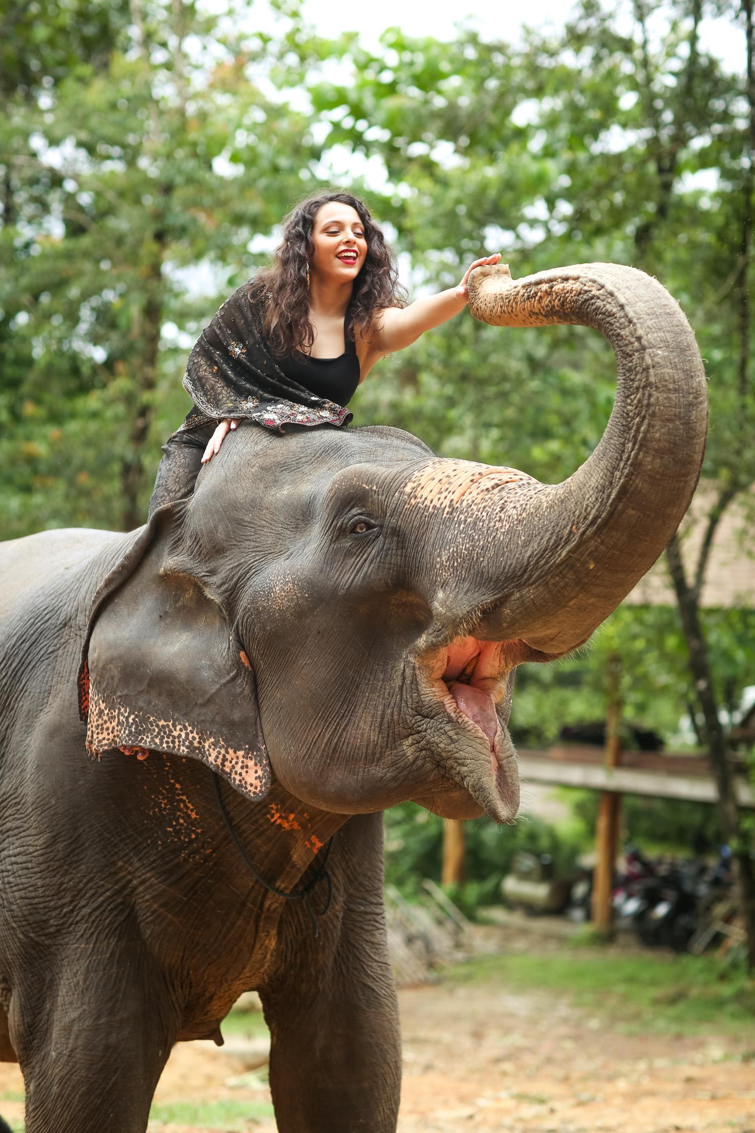 elephant-33.jpg