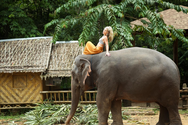 elephant-41.jpg