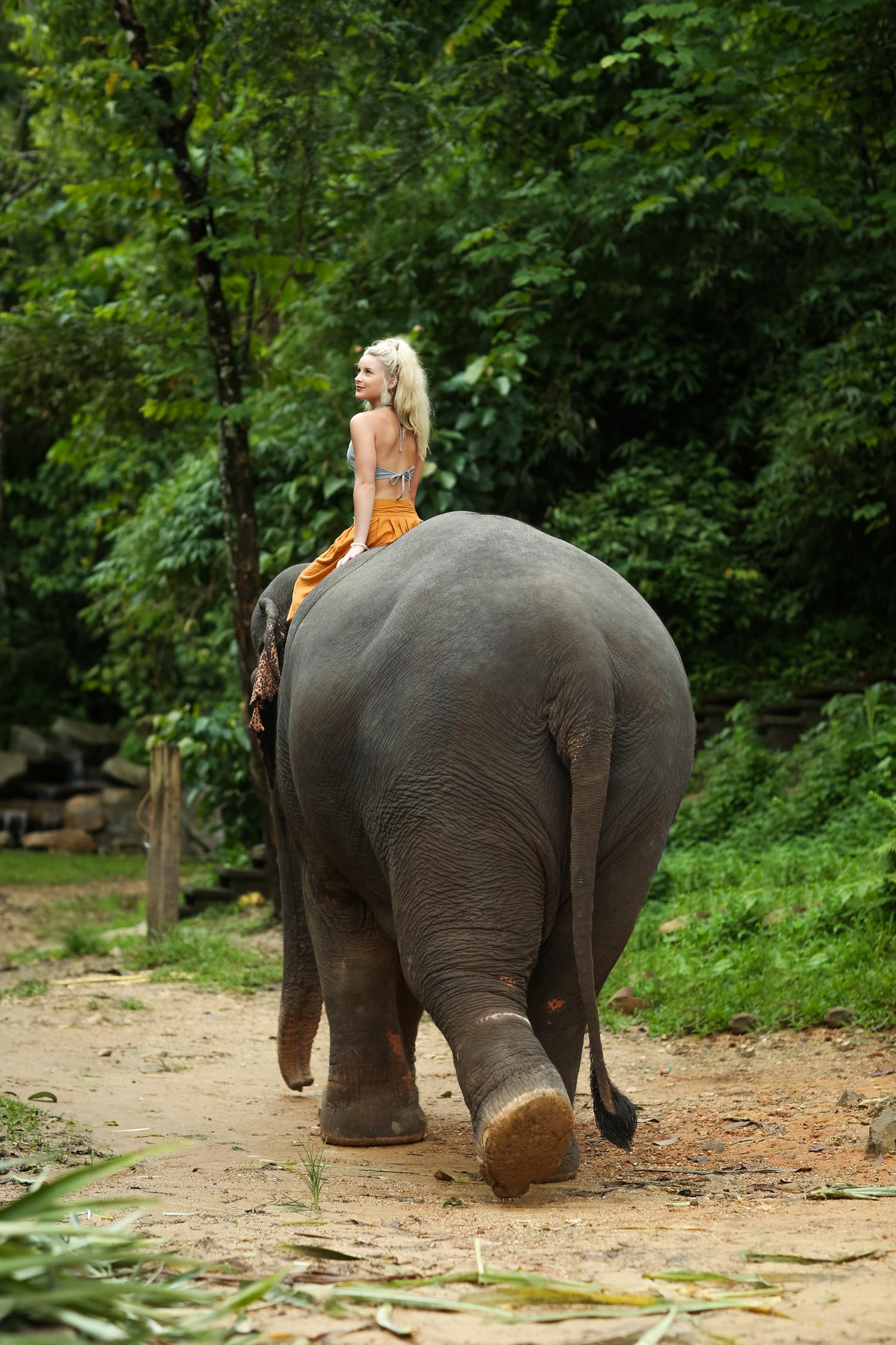 elephant-45.jpg