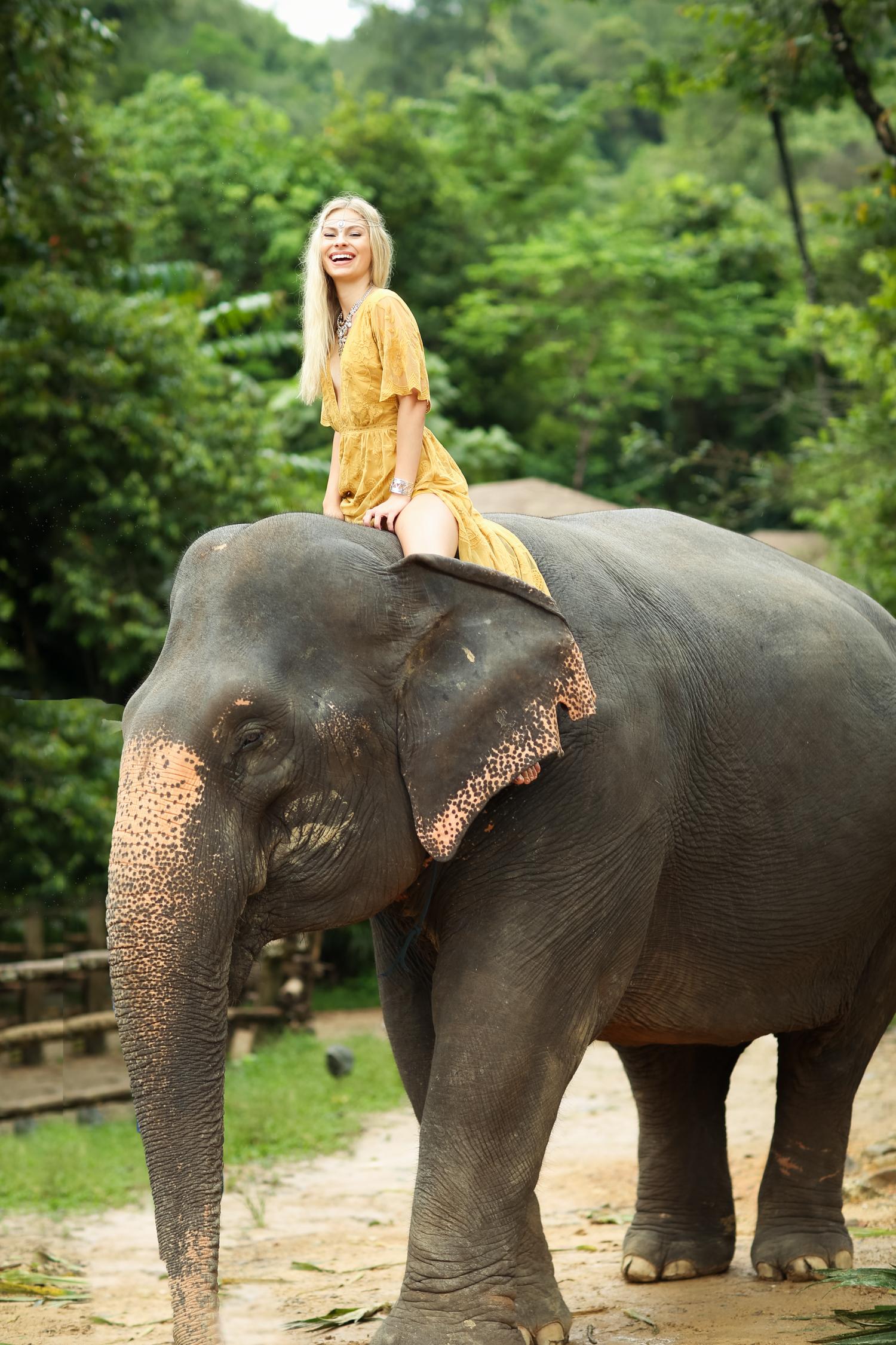 elephant-52.jpg