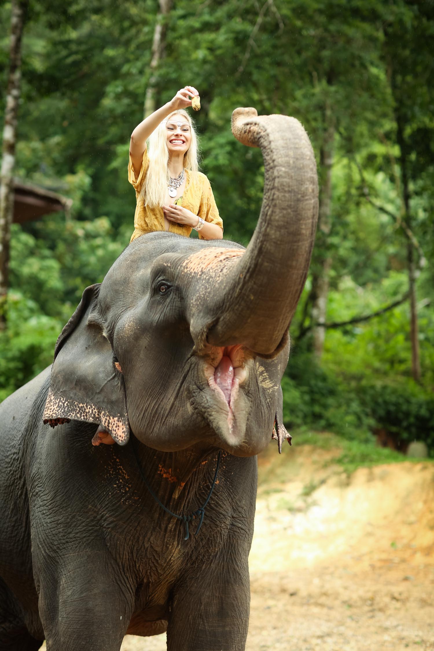 elephant-53.jpg