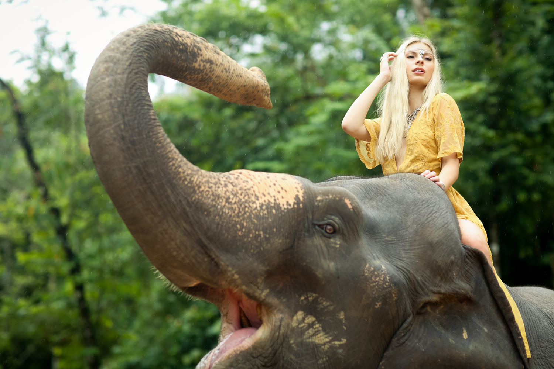 elephant-55.jpg