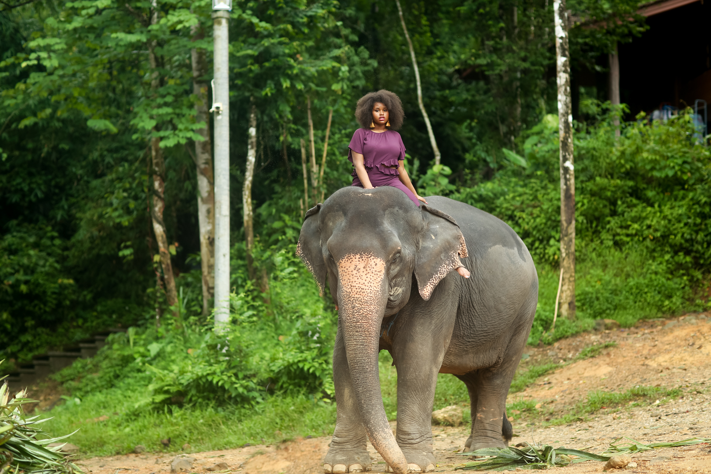 elephant-59.jpg