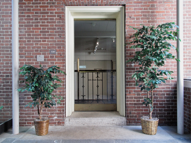 Installation view of the ficus trees framing the entrance to the museum