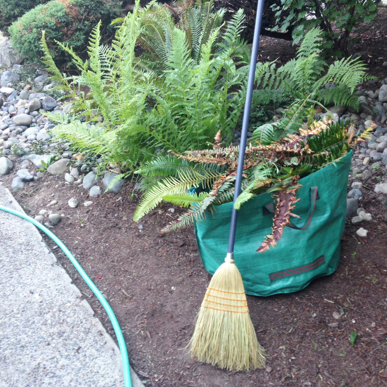A meditation on pruning the ferns in my yard.