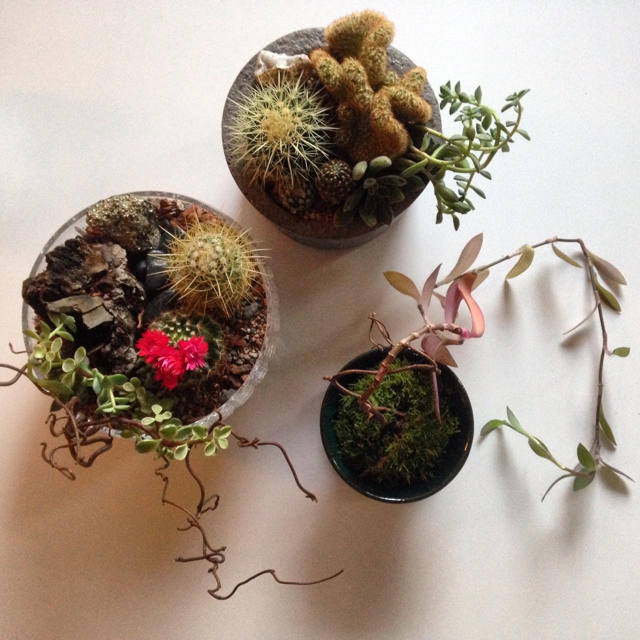 Cactiscape.JPG