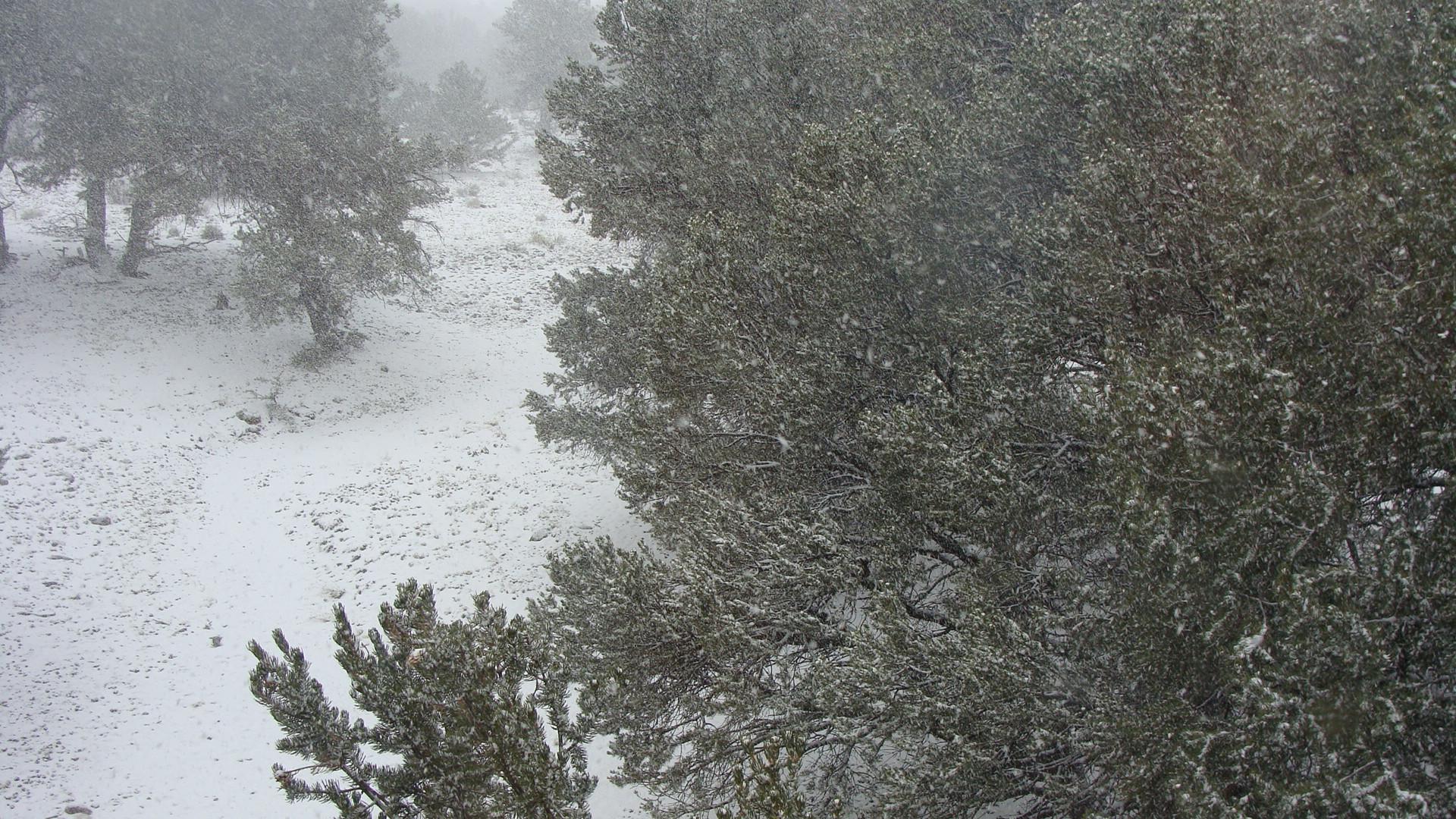snow storm trees