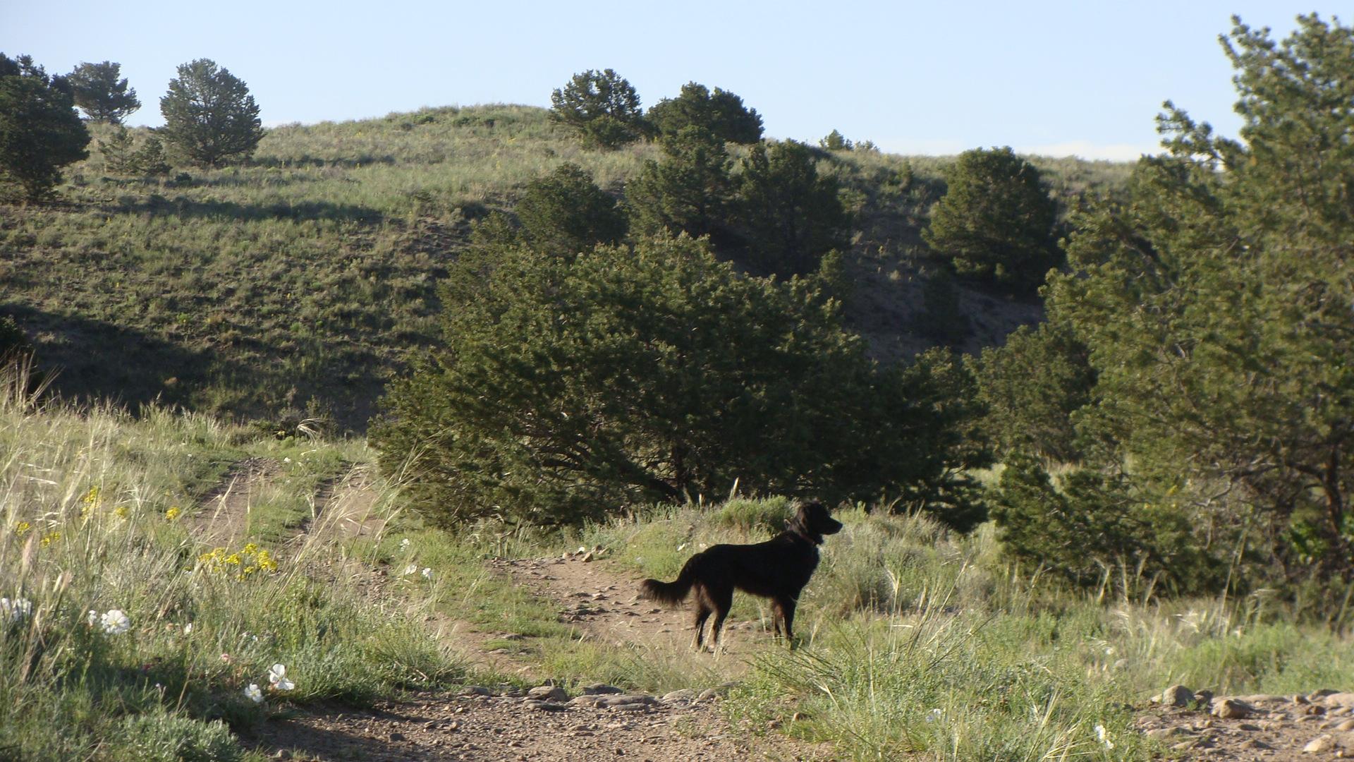 luke on the trail