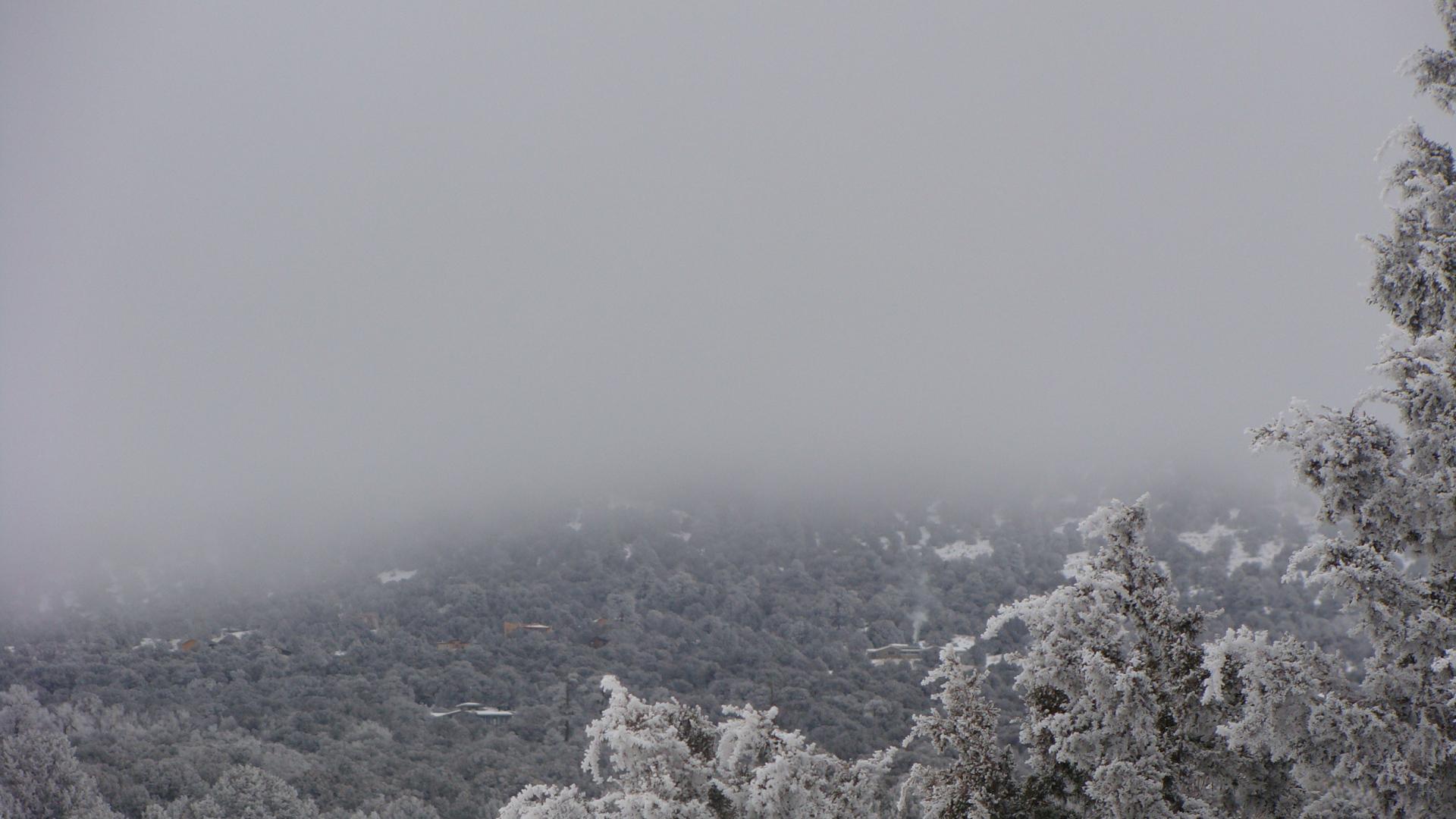 snowy foggy trees