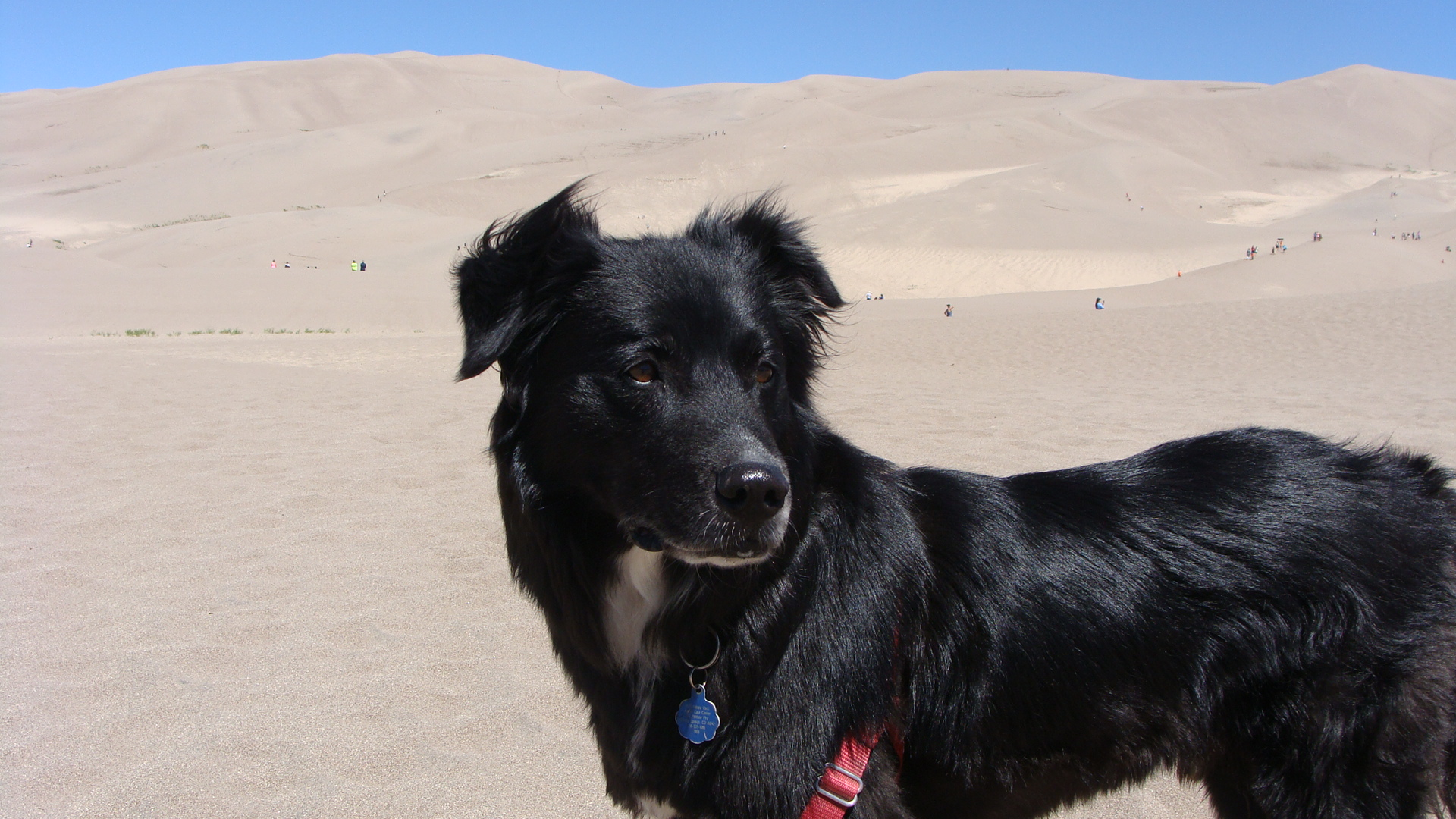 A mid-summer trip to the Great Sand Dunes nearby.