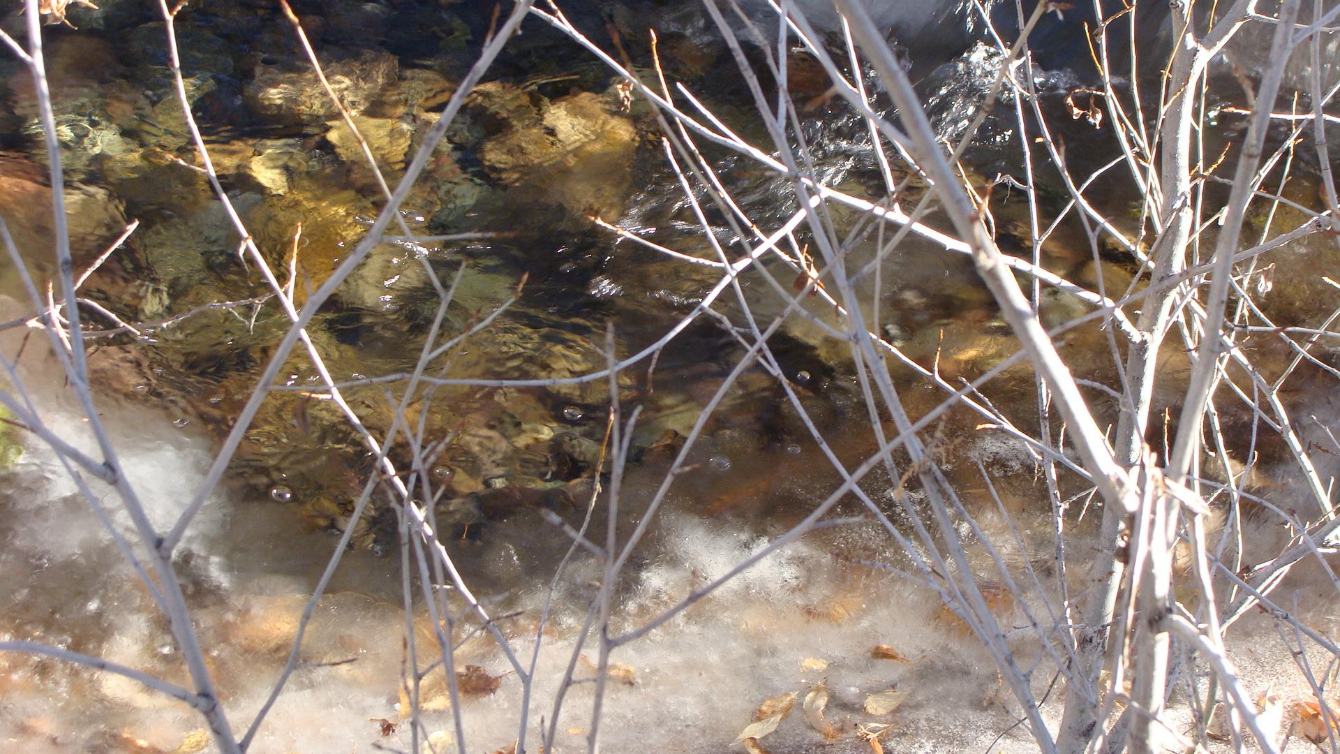 A quiet moment at Cottonwood Creek