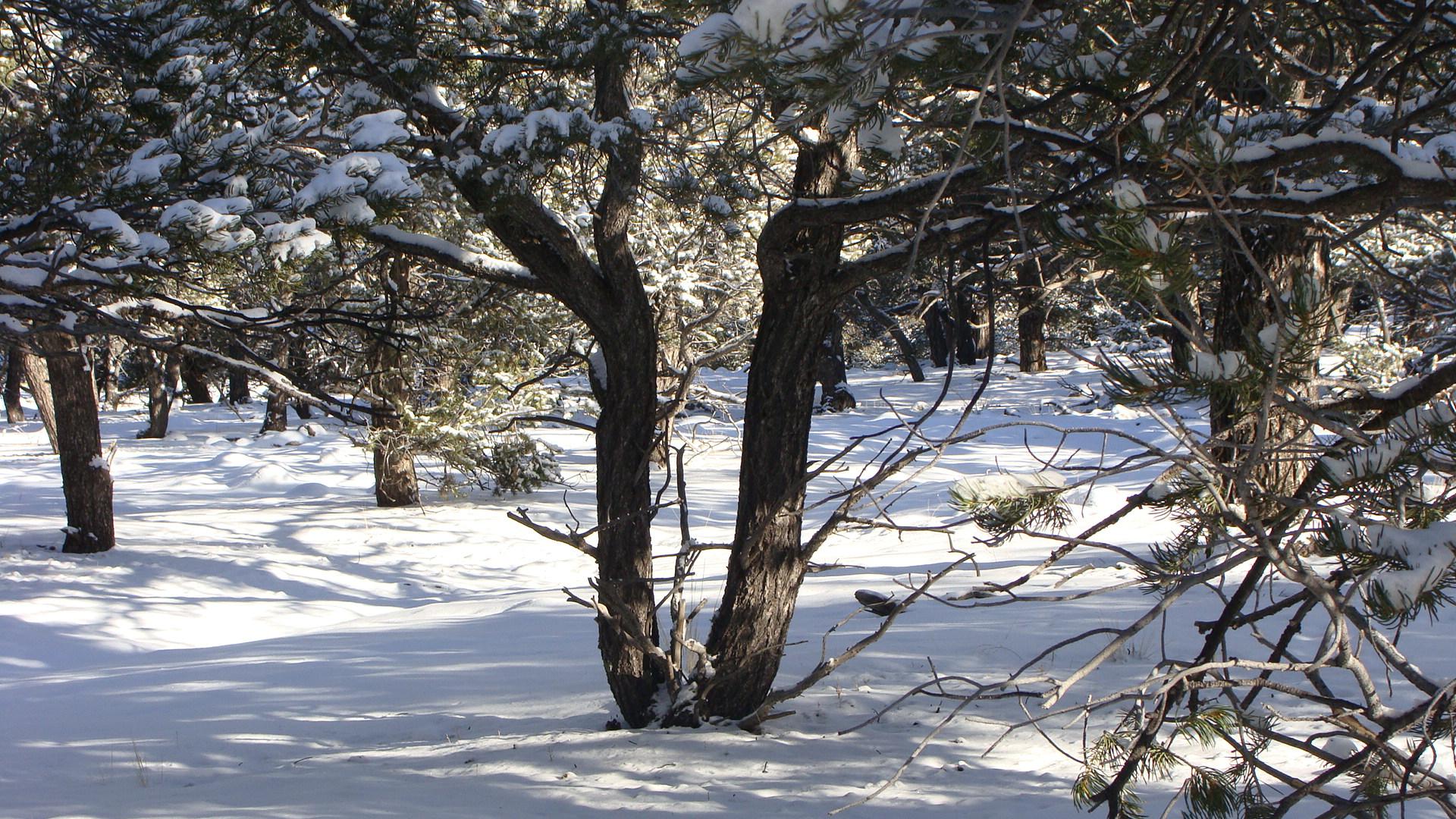 Walking in the Snowy Woods ...